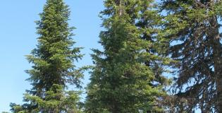 SMarTForests